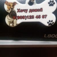 Брелок на ошейник для собаки или кошки